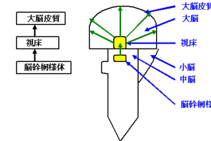 意識障害図1